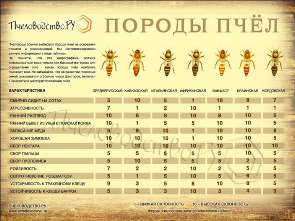 Сколько живут пчелы и от чего зависит продолжительность их жизни?