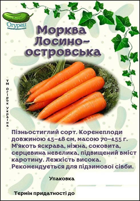 """Морковь """"лосиноостровская 13"""": описание и характеристика сорта, особенности посадки и выращивания, а также сбор урожая, достоинства и недостатки"""