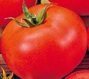 Фото, отзывы, описание, характеристика, урожайность сорта помидора «дубрава» («дубок»)