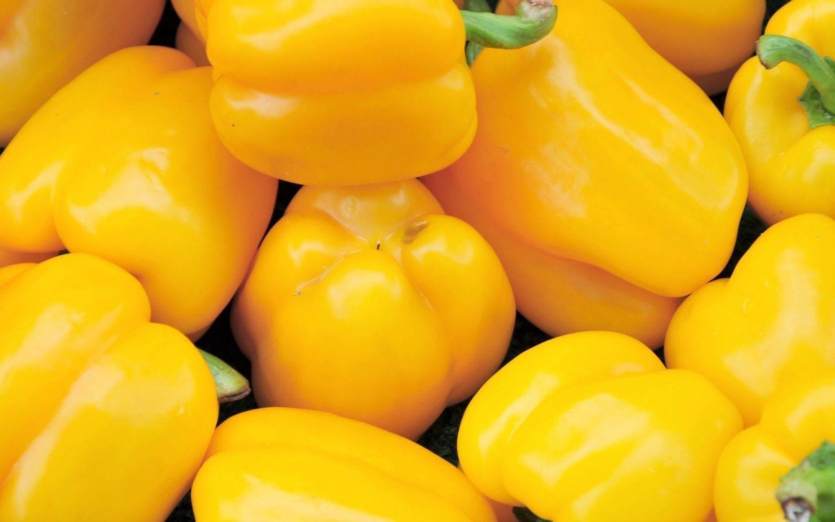 Именитый сорт для фермеров и новичков — перец адмирал колчак f1: отзывы и описание