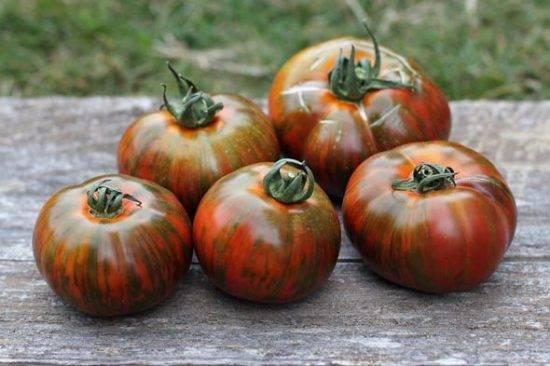 Сорт томата полосатый шоколад: описание сорта, характеристика, выращивание