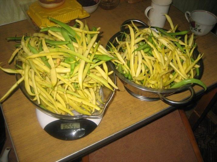 Спаржевая фасоль: выращивание, уход, лучшие сорта