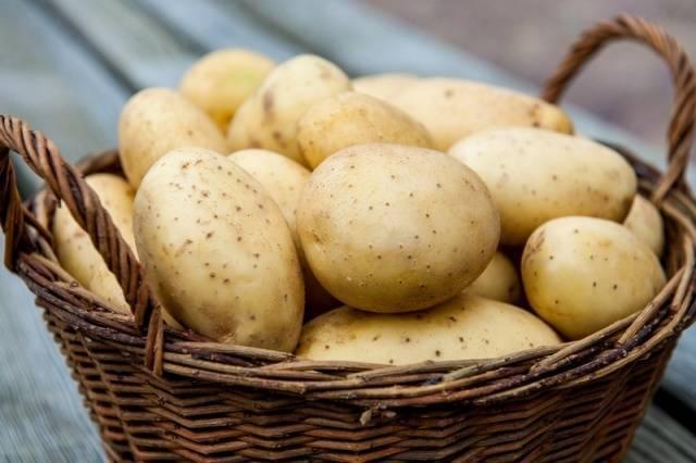 Удивительный сорт картофеля «виталот» с фиолетовой кожицей и мякотью