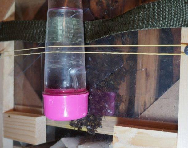 Изготовление поилки для пчёл своими руками