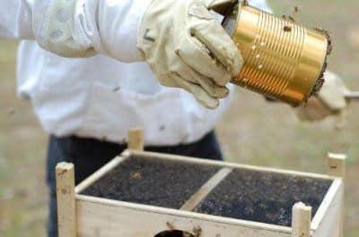 Как сделать кормушки для пчел своими руками