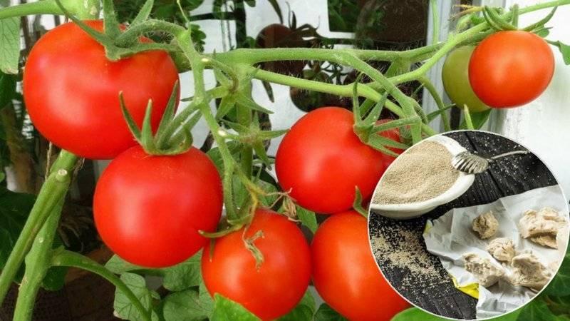 Для чего нужны дрожжи на помидорных и огуречных грядках