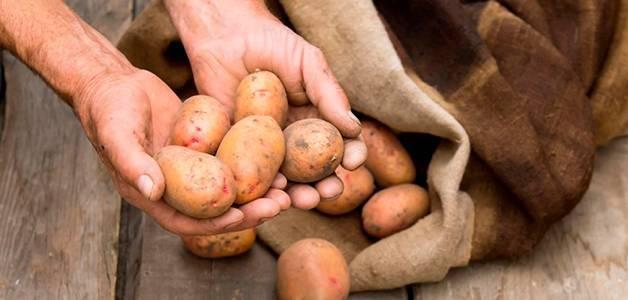 Почему картошка чернеет внутри при хранении?