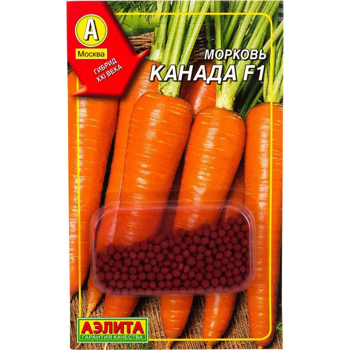 Особенности выращивания и ухода за морковью каскад