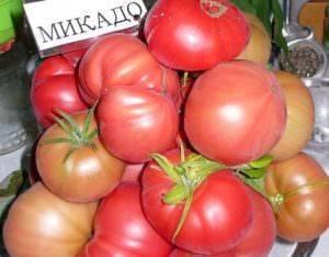 Томат микадо розовый: описание сорта и выращивание помидоров