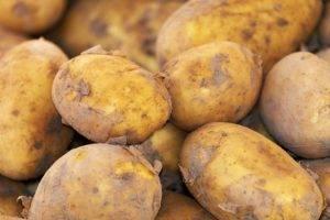 Сорт картофеля «колобок»: характеристика, описание, урожайность, отзывы и фото