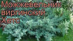 Можжевельник казацкий: описание, фото, посадка и уход