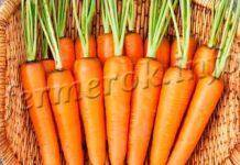 Морковь дордонь — описание сорта, фото, отзывы, посадка и уход