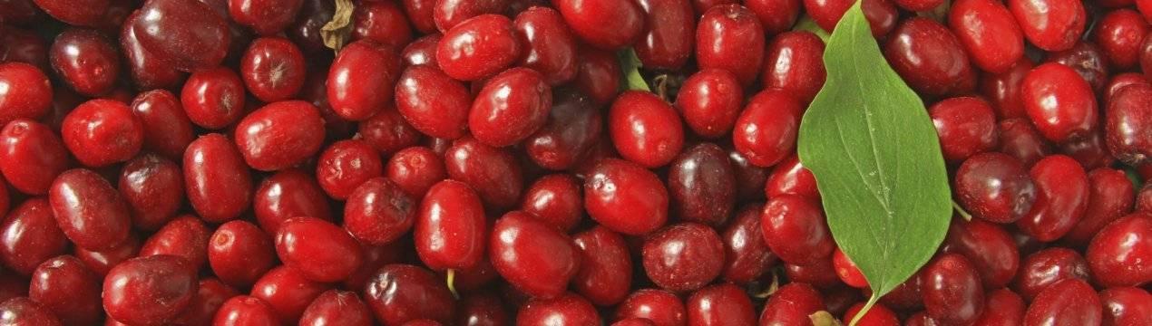 Кизил при геморрое: лечение геморроя косточками и ягодами