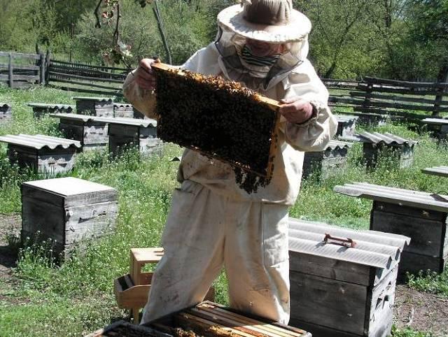 Как правильно подкармливать пчёл зимой?