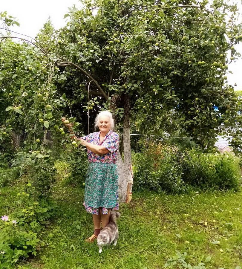 Обработка крыжовника медным купоросом весной: правила и ошибки