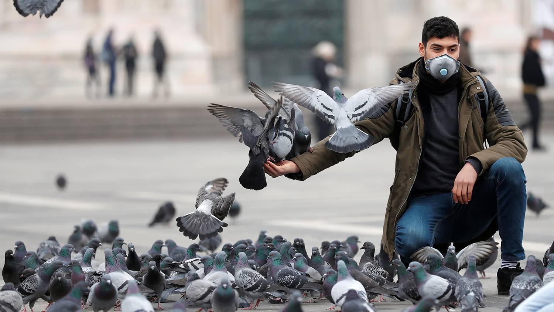 Голуби, их болезни и лечение. болезни голубей, опасные для человека