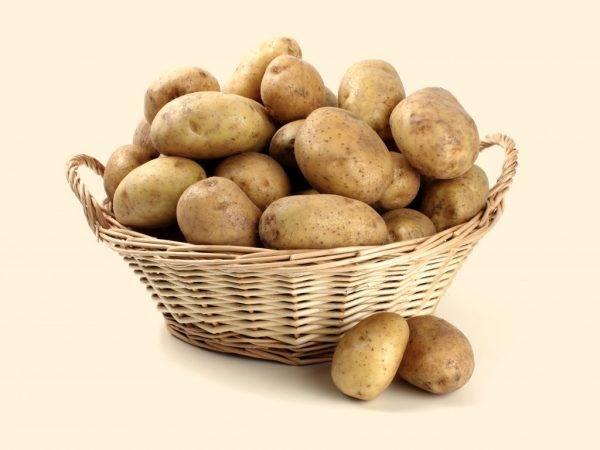Обзор самых ранних сортов картофеля: подробные описания и характеристики