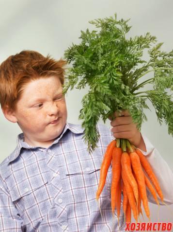 Какие существуют сорта красной моркови без сердцевины?