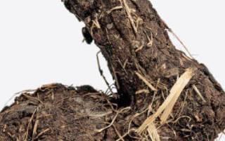 Кроличий навоз как удобрение: как применять на огороде, отзывы