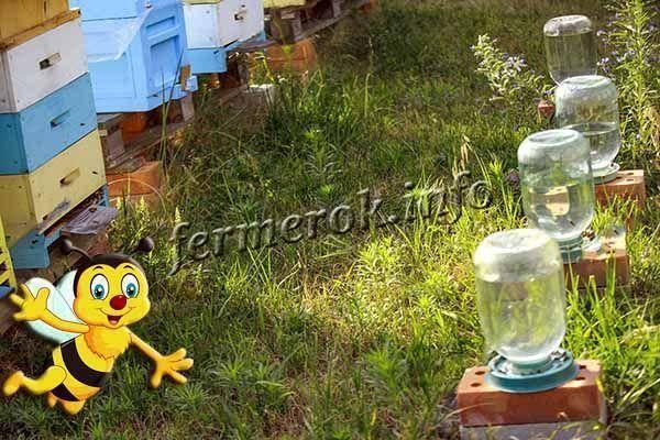 Как сделать поилку для пчел в домашних условиях