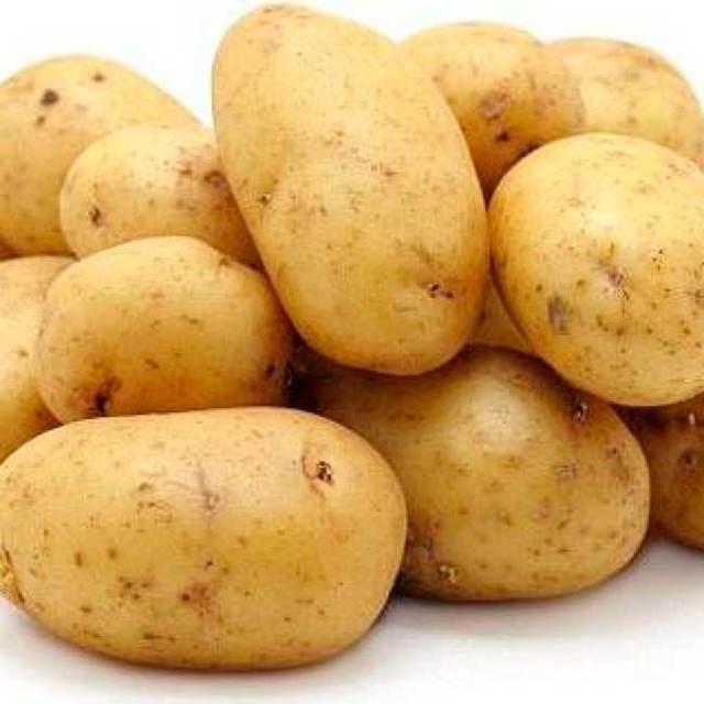 Картофель лидер
