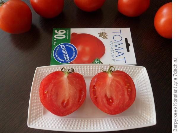 Сорт помидор хали гали описание