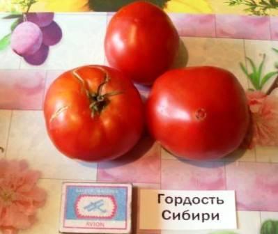 Сорта томатов сибирской селекции с фото и описанием