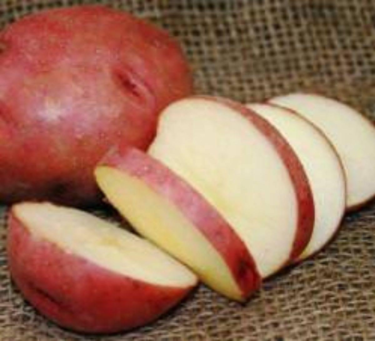 Картофель лабадия: описание сорта, характеристика и фото, нюансы выращивания и ухода