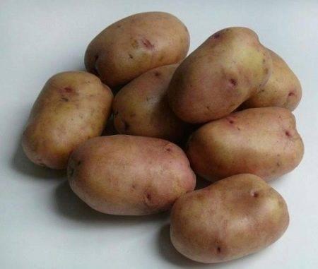 Картошка сорта славянка — красивая и вкусная