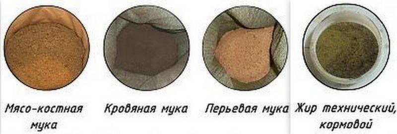 Мясокостная мука: применение для плодово-овощных и декоративных культур, состав