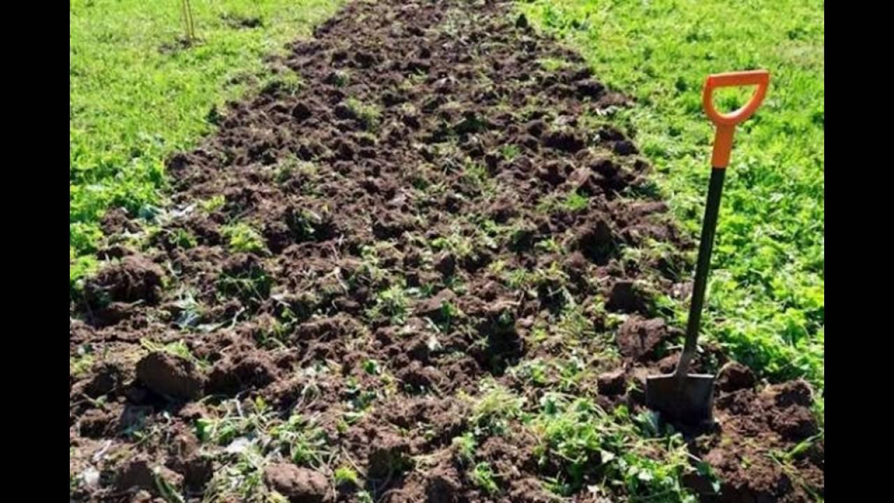 Как обработать землю после фитофторы томатов