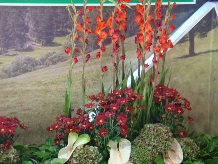 Королевский цветок в ландшафтном дизайне – гладиолус в композициях