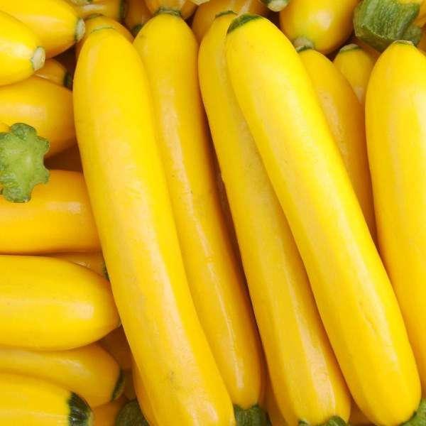 Какие существуют сорта жёлтых кабачков?