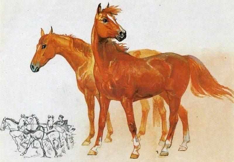Лошадь рыжей масти: описание, генетика, фото