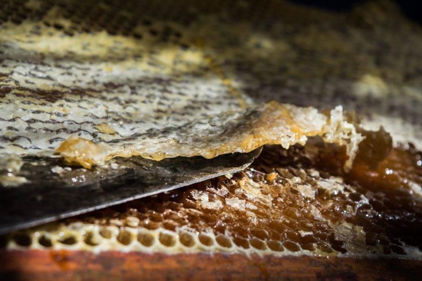 Особенности забруса пчелиного, что это такое и как им лечиться