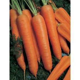 Сорт моркови детская сладкая: описание сорта + отзывы