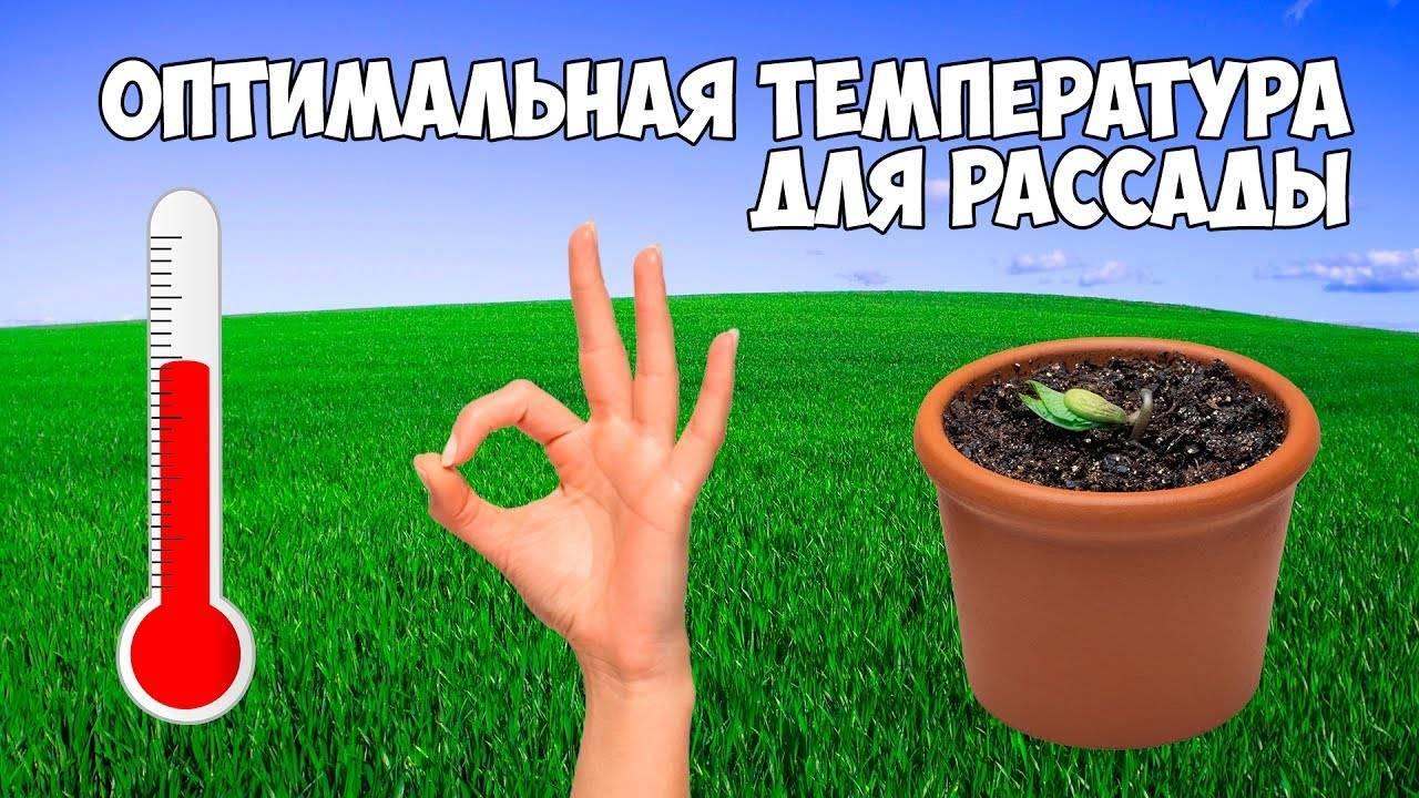Выращивание огурцов на рассаду: сроки, технология посадки и ухода
