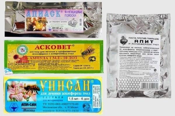 Профилактика пчел от опасных болезней