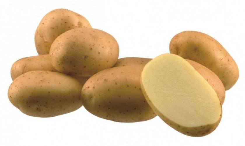 Описание сорта картофеля аризона