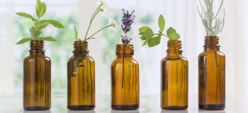 Эфирное масло перечной мяты: полезные свойства и применение