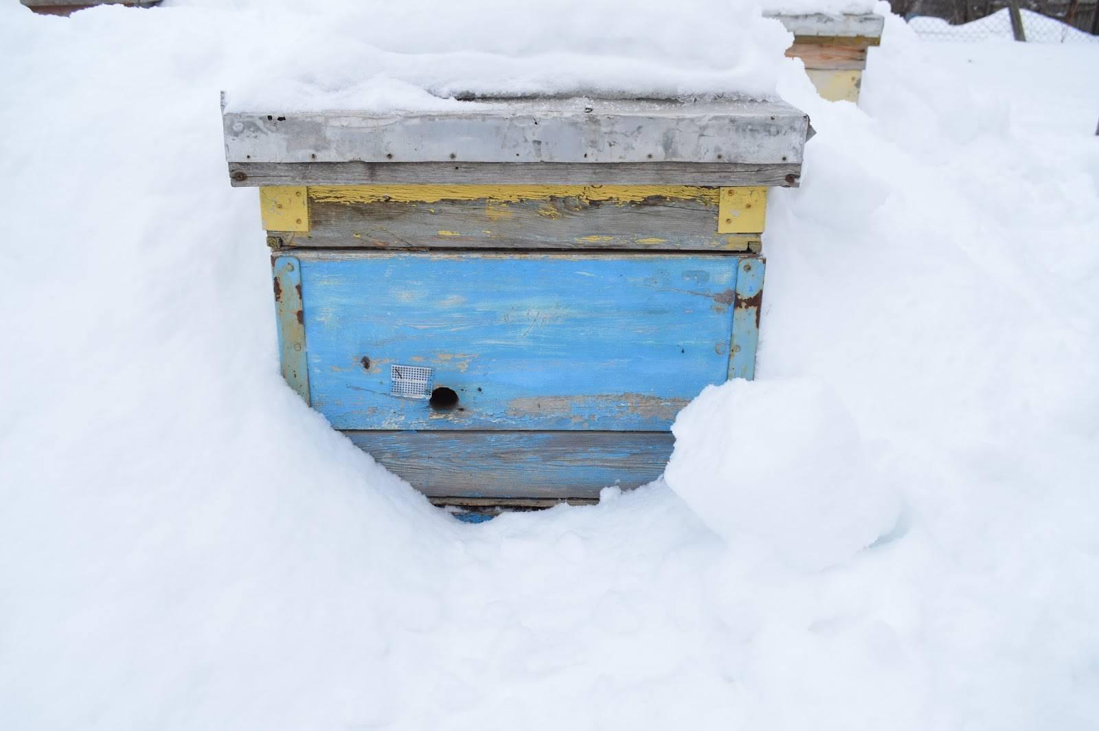 Подготовка пчел к зимовке