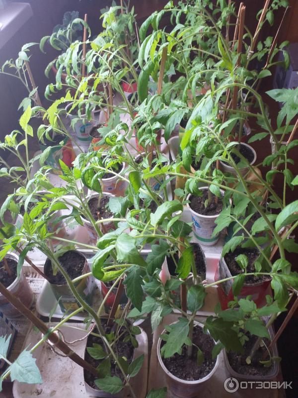 Удобрения для томатов и перцев малышок: состав, инструкция по применению, цена