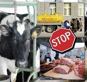 Симптомы бруцеллеза у коров, причины появления, методы лечения