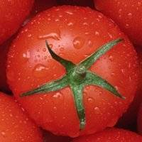 Новые сорта томатов на 2020 год сибирской селекции: для открытого грунта, для теплиц