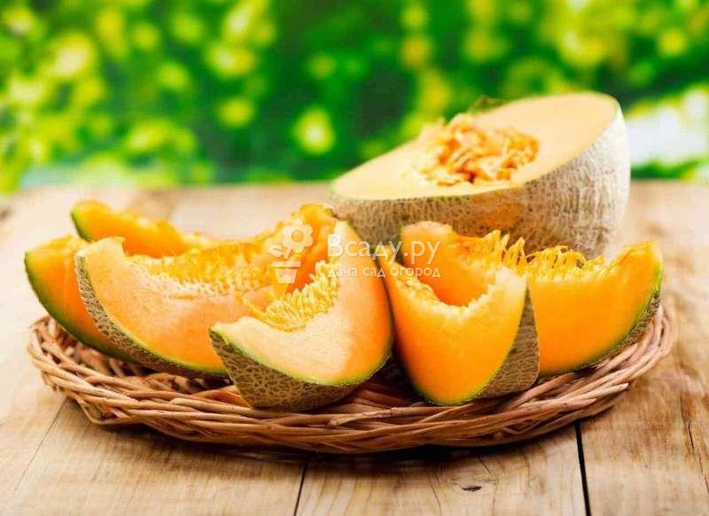 Дыня торпеда: калорийность и витаминный состав, польза и вред, как правильно выбрать вкусную