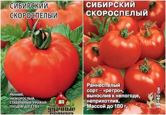 Томат сибирский скороспелый сорт: описание, выращивание и пасынкование