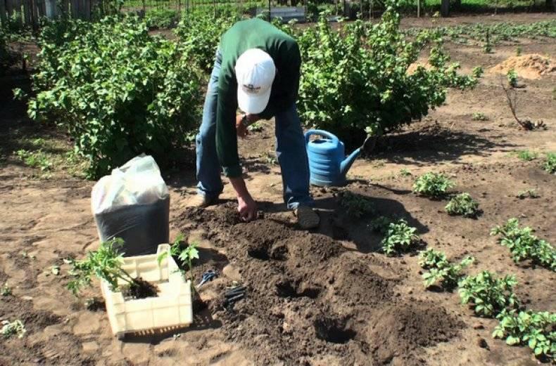 Двойной суперфосфат: формула, свойства, состав, инструкция по применению для удобрения почвы