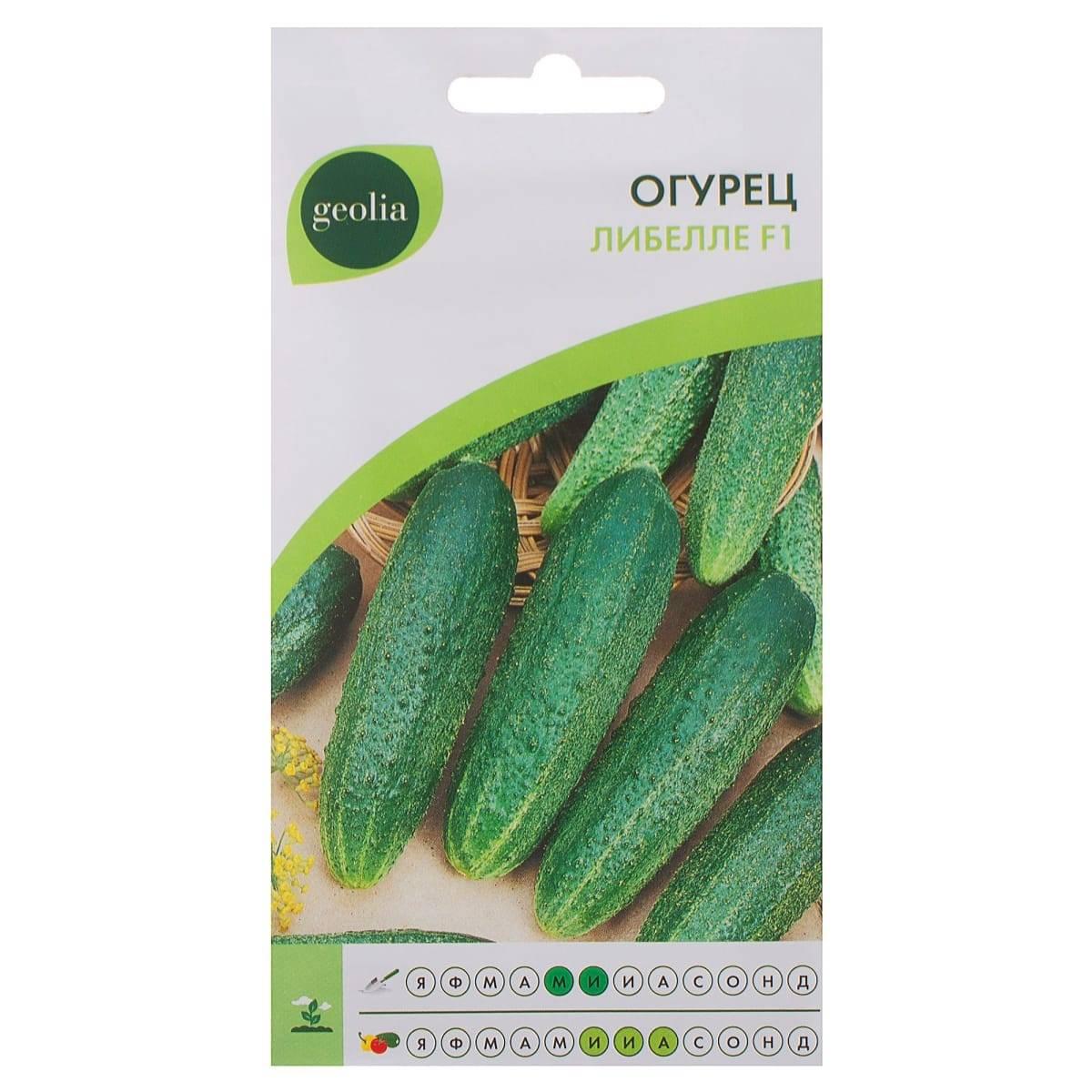 Описание и характеристики огурцов сорта либелла f1, выращивание и уход