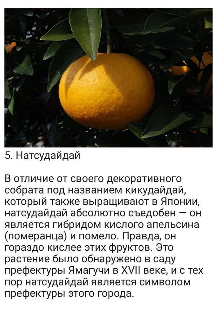 Разбираемся во множестве сортов красного фрукта: виды гранатов и различия между ними