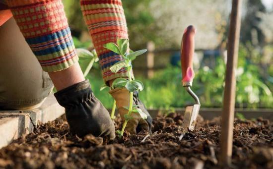 Стимулятор роста HB-101: инструкция по применению, отзывы садоводов